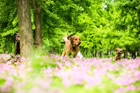 草の若い犬プレイ 写真素材