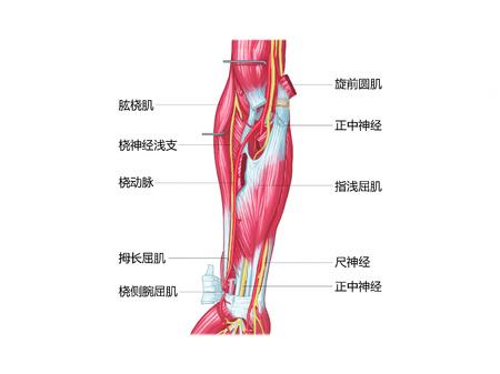 Arm bovenste ledemaat Stockfoto