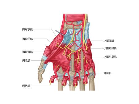 Handstructuur