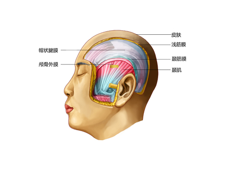 The temporal region Stock Photo