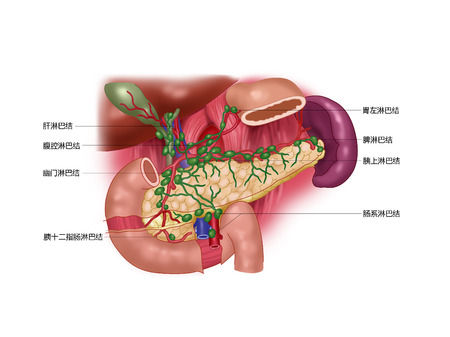alvleesklier