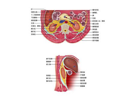 Capsule van de nieren