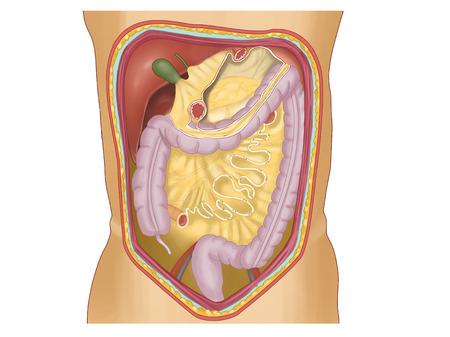 Een kaart van de ruimten tussen de buik, de darm, de dikke darm en de dikke darm
