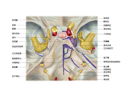 Pituitaire dura matervorming en bloedvat