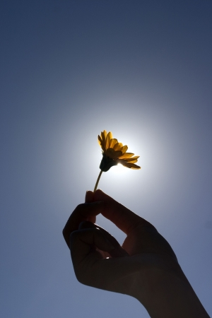 hand holding flower: Silhouette of womans hand holding a flower under the sun.