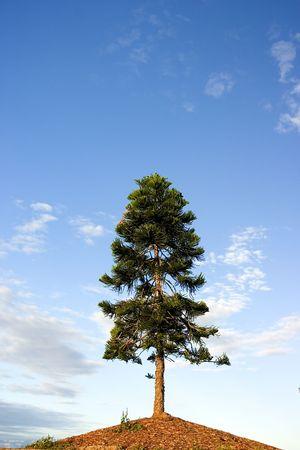 sprung: Tree against blue sky