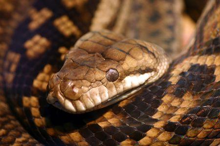 observant: Macro shot of a snake in australia zoo Stock Photo