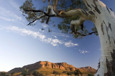 ranges: Mattina vista girato a Flinders Ranges