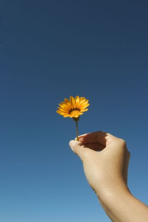 Offering a flower.. photo