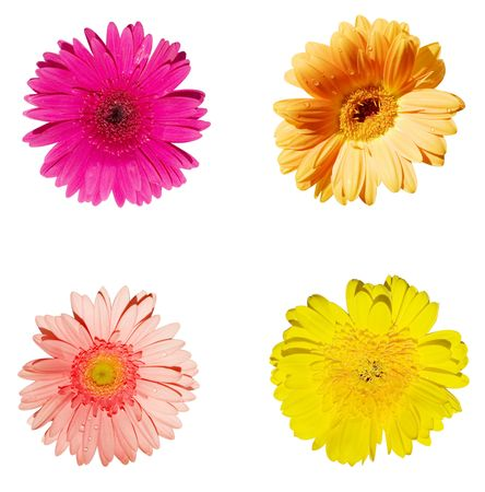 16 megapixels Isolated Red, Pink, Orange, and Yellow gerbera