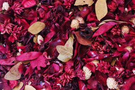 fiori secchi: Fiori e foglie essiccate di sfondo