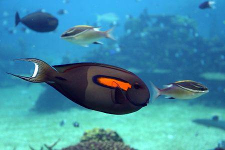 str: Tropical fish at Seaworld - Australia