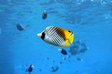 str: Colorful fish at seaworld - australia Stock Photo