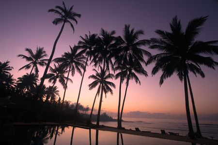 bask: Silhouette of coconut tree at sunrise