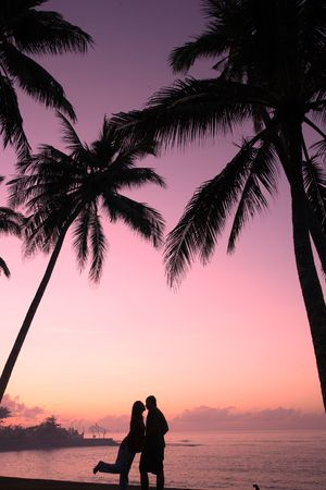 Silhouette of a couple kissing under coconut trees Stock Photo - 648364
