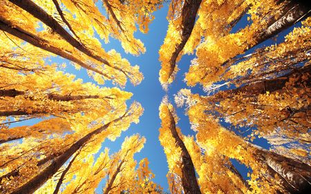Yellow trees during Autumn in New Zealand Stock Photo - 648359
