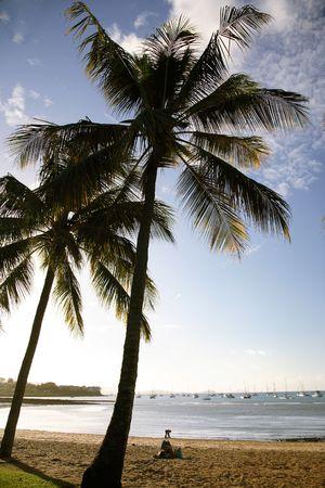 Silhouette of palm trees on Whitsunday beach - Australia Stock Photo - 665277