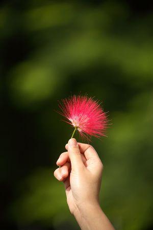 kind hearted: Sweet red flower captured at University of Queensland, Brisbane, Australia
