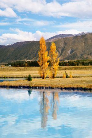 tekapo: Yellow trees at Lake Tekapo, New Zealand Stock Photo