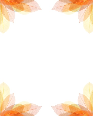autum: transparent autum leaves frame isolated on white
