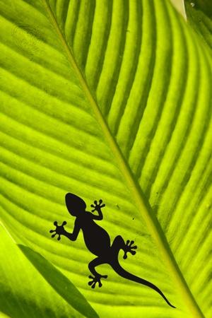 salamander: Colpo di macro di un geco e una Mosca su una foglia isolata su nero