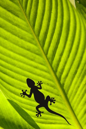 Macro shot of a gecko and a fly on a leaf isolated on black photo