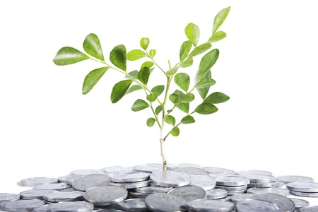 pile of coins: Investment concept with tree and pile of silver coins on white background