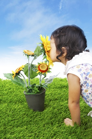 Young child smelling sunflowers on the green grass