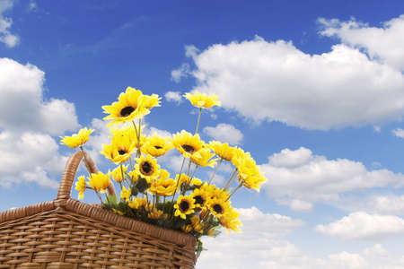 Picnic basket filled with sunflowers shot against blue summer sky photo