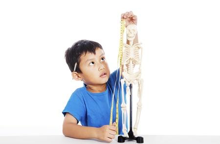 Portrait of little elementary school student measures human skeleton by measurement tape photo