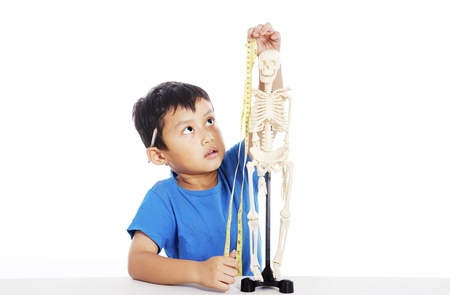 Portrait of little elementary school student measures human skeleton by measurement tape photo