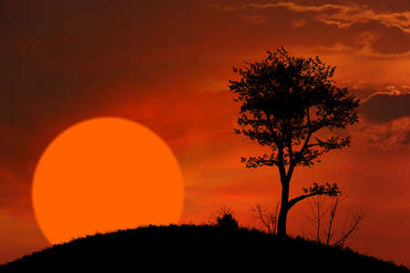 African sunset and tree background photo