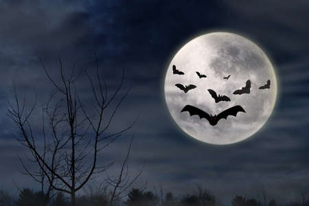 Halloween backgroudn with bats flying in the dark night photo
