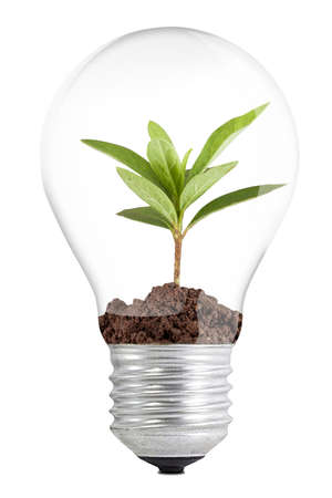 idea generation: Tree in a lamp on white background Stock Photo
