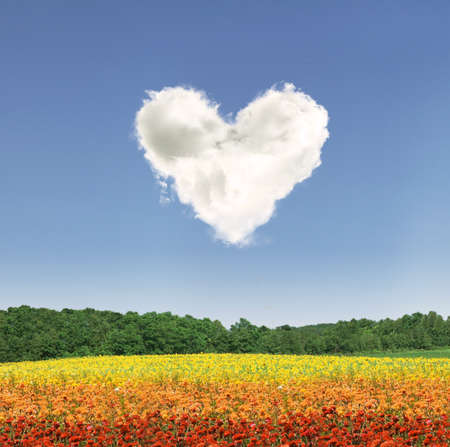 Heart shape cloud over colorful flowers during the day photo