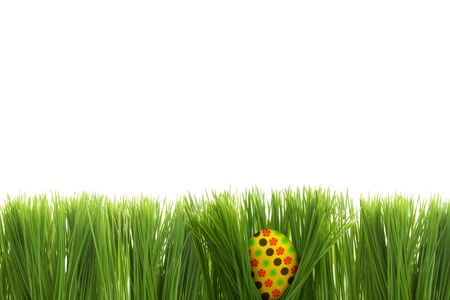 Colorful easter egg hiding behind grass on white background photo