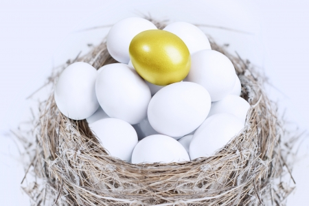 Unique golden egg on top of white eggs inside a nest, isolated on white photo