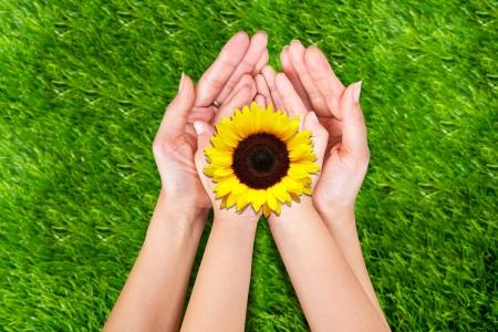 Moeder en zoon hebben gele zonnebloemen op groen gras Stockfoto
