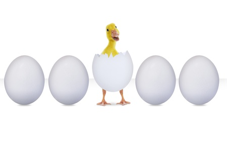 One hatched egg in the middle of other eggs on white background photo