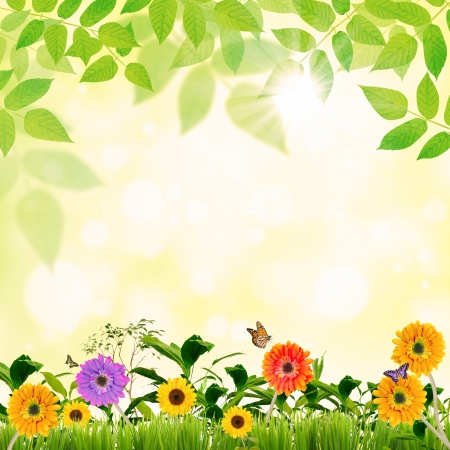 Spring concept in green with beautiful flowers Stock Photo - 19088263