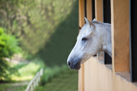 bridle: Picture of one horse staring at the green landscape