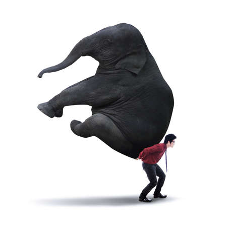 work load: Portrait of businessman carrying heavy elephant - isolated on white Stock Photo
