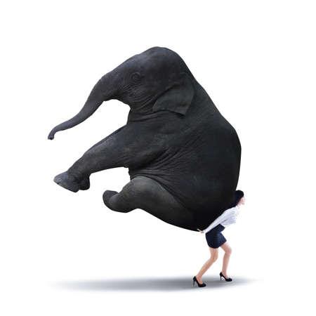 krachtige vrouw: Portret van zakenvrouw tillen van zware olifant geïsoleerd op wit Stockfoto
