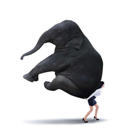 carga: Retrato de mujer de negocios levantar pesado elefante aislado en blanco
