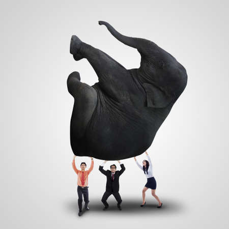 difficult: Business team is lifting heavy elephant on white background