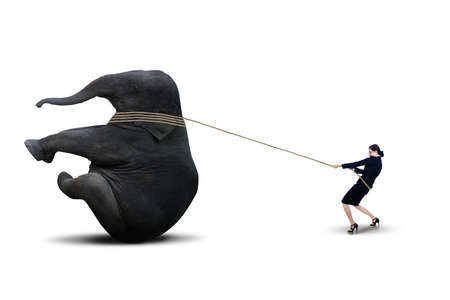 Businesswoman pulling an elephant isolated over white photo