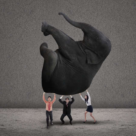 Business people lifting an elephant together on grey background photo