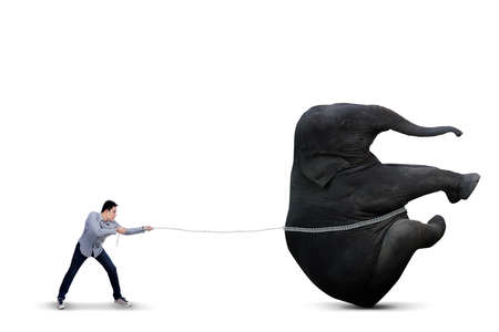 difficult: Asian man is pulling big elephant on white background  Stock Photo