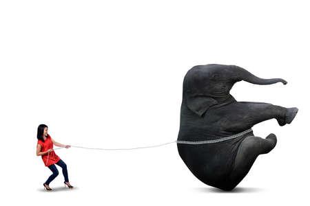 Casual student is pulling big elephant on white background photo