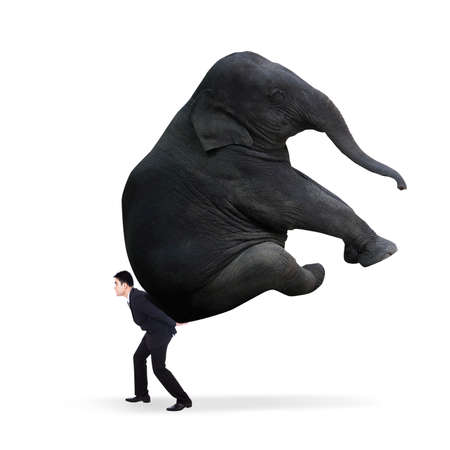 work load: Portrait of businessman carrying heavy elephant - isolated on white